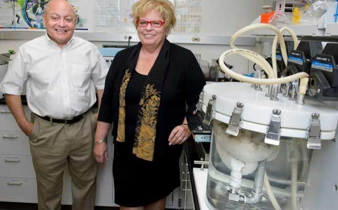 «Мы смогли создать гораздо лучшую сосудистую систему в легких, раньше этого не удавалось», - заявили доктор Николс и доктор Кортьелла