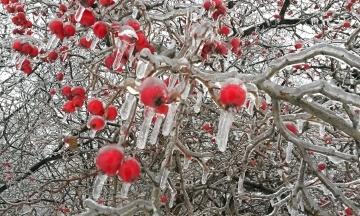 Дожди и ночные морозы. Синоптики спрогнозировали погоду в Украине в выходные