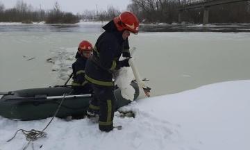 У Львівській області працівники ДСНС врятували зграю лебедів, які примерзли до льоду