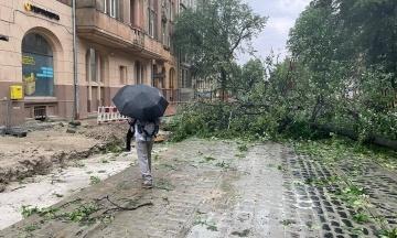 По Львову пронеслась буря с дождем, повалила деревья и подтопила дома. В городе развернули оперативный штаб