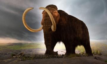 Стартап из США обещает возродить вымерших мамонтов и (если повезет) открыть настоящий «Парк Юрского периода». Это вообще как?! Объясняем нюансы