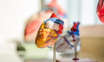 У США донорське сердце везли на гелікоптері, який розбився. Потім лікар упустив його на підлогу, але зрештою орган успішно пересадили