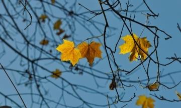 У Києві зареєстрували перший осінній температурний рекорд