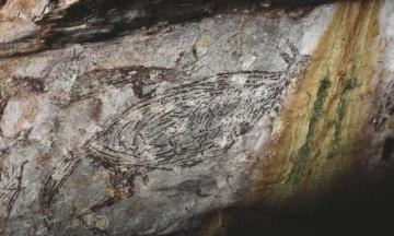 В Австралії виявили найстаріший малюнок. Це наскельне зображення кенгуру, якому 17 тисяч років