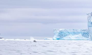 Один из крупнейших айсбергов мира почти растаял. Ученые больше не видят смысла за ним наблюдать