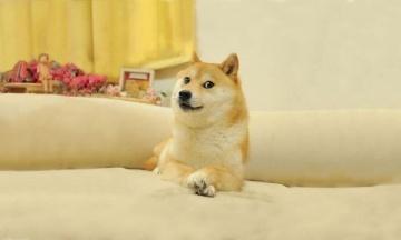 Мем Doge із зображенням пса продали на аукціоні за $4 мільйони