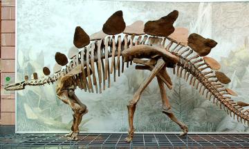 В Шотландии исследовательница бежала по побережью и случайно наткнулась на кость динозавра, которой 166 миллионов лет