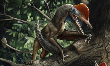 «Обезьянодактиль». В Китае нашли окаменелости летающего динозавра, имевшего «руки», похожие на человеческие