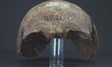 Німецькі вчені назвали найстаршу жертву чуми — це чоловік, який жив 5 тисяч років тому. Його скелет знайшли в Латвії