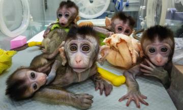 У світі закінчуються головні піддослідні для вакцин від коронавірусу — мавпи. Раніше всі купували їх у Китаї, тепер учені кажуть, що потрібен власний «стратегічний запас». За матеріалом NYT