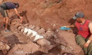 В Аргентине нашли окаменелости динозавра, жившего 98 миллионов лет назад. Он может оказаться крупнейшим животным в истории