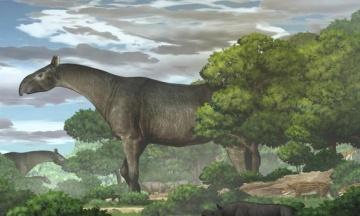Исследователи нашли в Китае останки носорога, который был выше жирафа