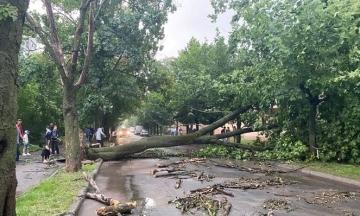 Львов второй раз за неделю накрыла буря: деревья повалены, а электротранспорт не работает