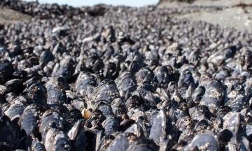 У Канаді через аномальну спеку загинули мільярди морських тварин
