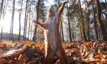 Прогноз погоди: в Україну йде потепління, але синоптики попереджають про сильний вітер
