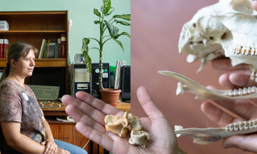 Зоолог Евгения Яниш проехала 2 200 км по Монголии, брала в экспедицию детей, держала дома ворона. Сейчас она изучает ископаемых птиц и готовит к выпуску Красную книгу