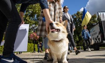 «Мех — это не круто». В тридцати городах Украины и в Антарктиде (!) прошел марш за права животных. Вот 10 запредельно милых фотографий с киевской акции