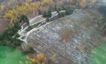 В Киевской области раскрыли незаконную вырубку леса. Сумма убытков — 13 миллионов гривен