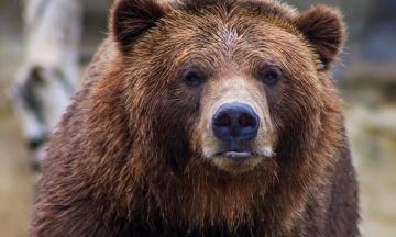 На Аляске береговая охрана спасла мужчину, который неделю защищался от медведя гризли