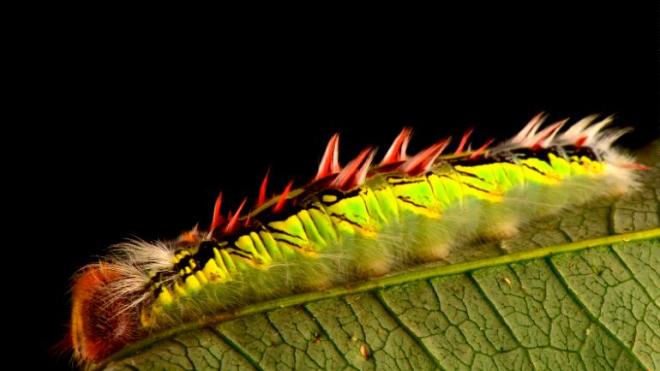 В горах Боливии нашли десятки новых и удивительных видов, а также животных, которые давно считались вымершими
