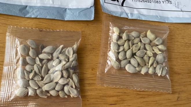 У США з'ясували, що за насіння було в загадкових посилках з Китаю. Побоювались, що воно може становити небезпеку