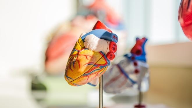 В США донорское сердце везли на вертолете, который разбился. Затем врач уронил его на пол, но в конце концов орган успешно пересадили