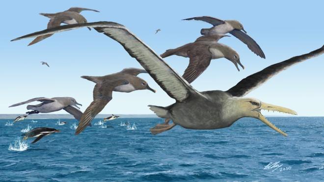 Миллионы лет назад в Антарктике жили гигантские хищные птицы с размахом крыльев более 6 метров