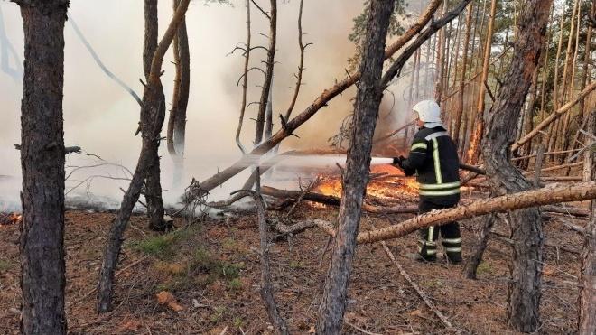 Нардепы приняли постановление о пожарах в Луганской области и требуют уволить главу ОГА