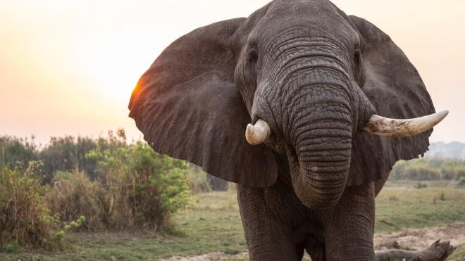 У Таїланді слон вночі вдерся до кухні місцевої мешканки. Вона зняла все на відео