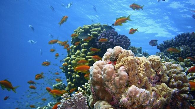 Большой Барьерный риф потерял более половины кораллов из-за изменений климата. Это грозит снижением популяции морских жителей