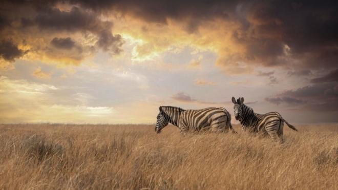 WWF: За пів століття популяція диких тварин у світі зменшилась на 68%. Під загрозою тепер здоров'я та добробут людей