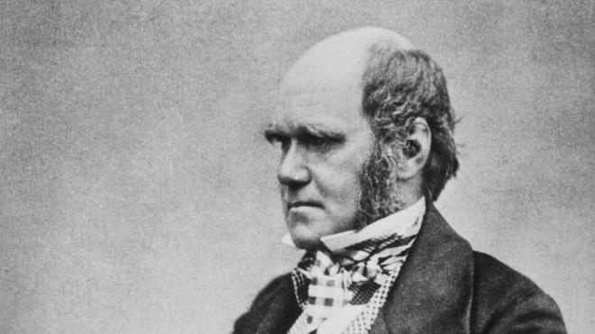 Бібліотека Кембриджу повідомила про крадіжку рукописів Дарвіна. Їх і так вже шукають 20 років