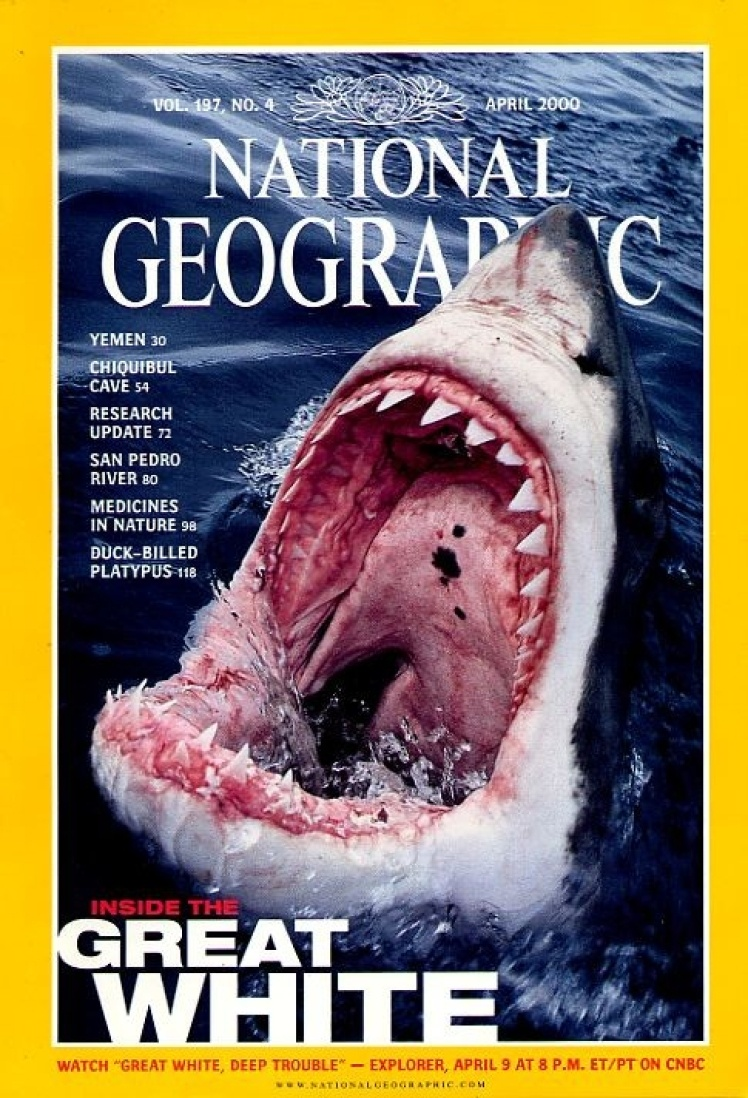Квітень 2000 року. На фото паща білої акули. Центральний матеріал номера про загрози, з якими стикається цей морський хижак.