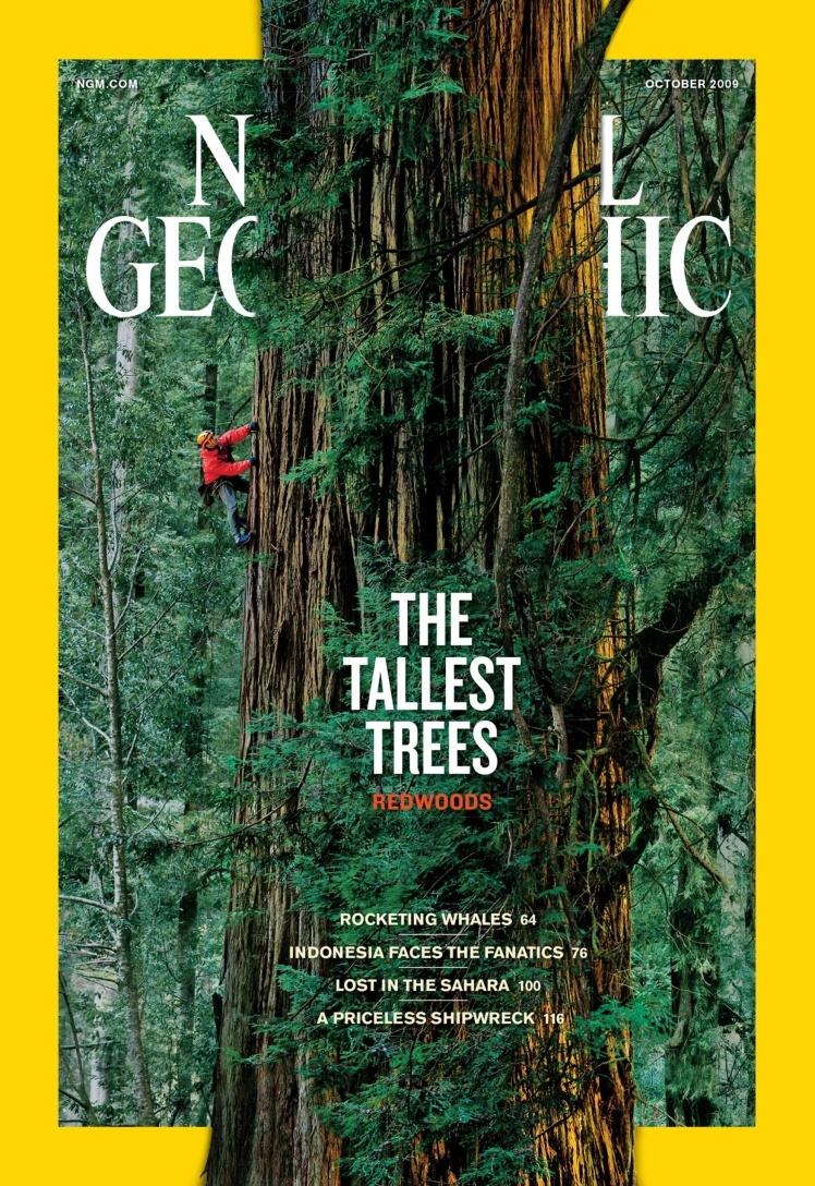 Жовтень 2009 року. Центральний матеріал номера про секвої Тихоокеанського узбережжя. На фото частина стовбура 1500-річного дерева заввишки понад 90 метрів.